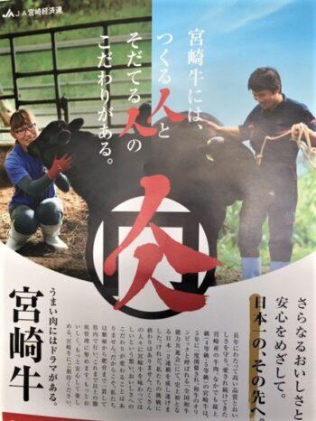 宮崎牛生体出荷!